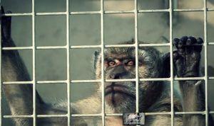 'Toque' de Bruselas a España por el uso de animales con fines científicos