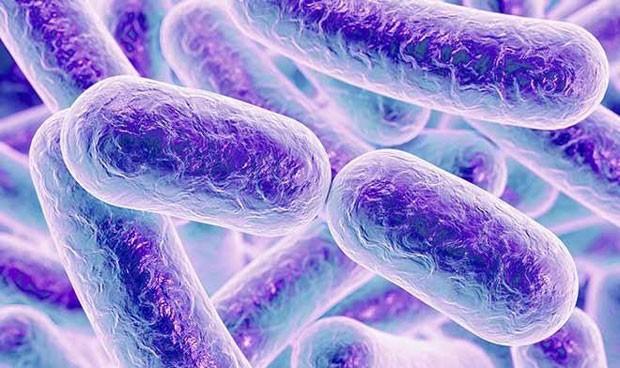 Adivinan la edad de la persona mirando su microbioma