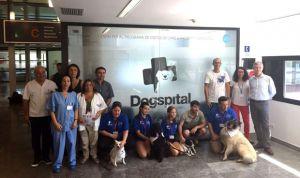 Can Misses abre su 'Dogspital', una sala de visitas para perros