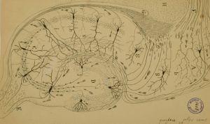 Cantabria Labs impulsa la mayor exposición de dibujos de Ramón y Cajal