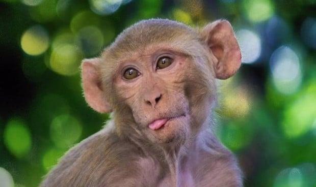 China notifica la primera muerte de un humano por el virus del mono B