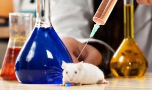 Científicos del CNIO logran destruir tumores en ratones mediante Crispr
