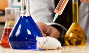 Consiguen bloquear la degeneración de la ELA en ratones