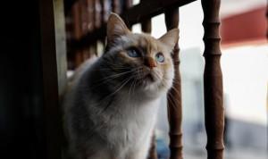 Coronavirus en gatos: un estudio confirma el contagio entre felinos