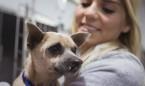 Coronavirus: los veterinarios no descartan que animales puedan contagiarse