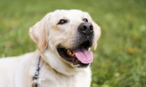 """Coronavirus y perros: """"No necesitan mascarillas porque no se contagian"""""""