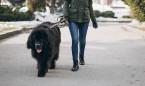 """Coronavirus y perros: sacarles """"no es una excusa para estar en la calle"""""""