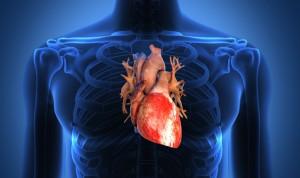 El efecto del Covid-19 en el corazón 'mata' células y compromete el latido
