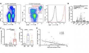Covid: la inmunidad humoral domina la respuesta temprana de anticuerpos