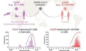 La variante californiana del Covid-19 evade la inmunidad celular