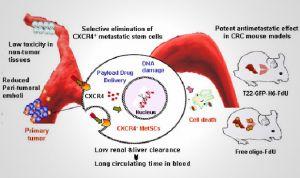 Crean un nanofármaco que bloquea la metástasis en cáncer colorrectal