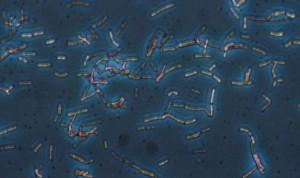 El CSIC describe un nuevo método de edición de la microbiota intestinal
