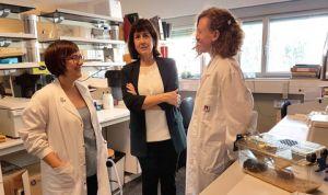 Curan la obesidad y la diabetes tipo 2 con terapia génica en ratones