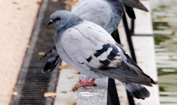 Dan la invalidez a una guía turística afectada por las heces de paloma
