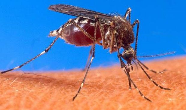 Dengue: Cataluña confirma su primera infección autóctona, sexta en España