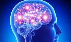 Descifran el código genético capaz de crear recuerdos en cerebros dañados