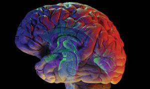 Descubren cómo el cerebro se 'protege' para no heredar el trastorno bipolar