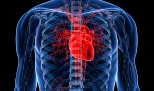 Descubren un 'muelle molecular' esencial para la función del corazón