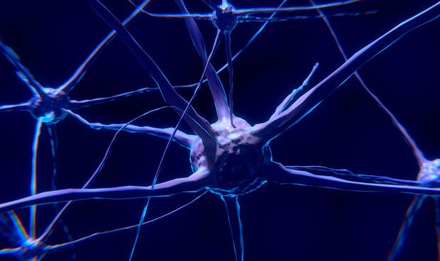 Descubren una defensa de las neuronas ante el envejecimiento del cerebro