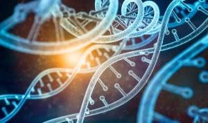 Descubren una molécula que observa daños en el ADN y vigila su reparación