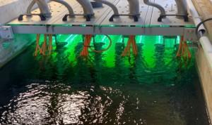 Detectan Covid-19 en las aguas residuales de Barcelona de marzo de 2019