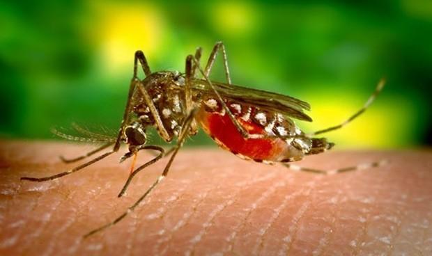 Detectan el segundo caso de dengue autóctono en Cataluña