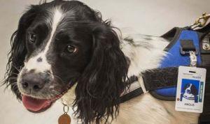 Dos perros 'cazabacterias', nueva arma contra la desinfección de hospitales