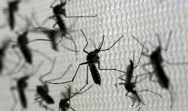 EEUU comienza a probar en personas la primera vacuna contra el zika