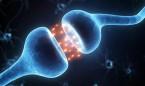 El 10% de los casos de miastenia gravis son refractaros a los tratamientos
