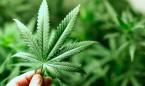 El cannabis mata células tumorales gracias al 'reciclaje celular'