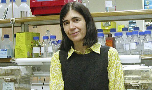 El CNIO conecta dos v�as de se�alizaci�n del c�ncer y el envejecimiento