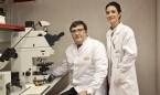El CNIO confirma el nexo entre un cáncer de próstata y uno de mama