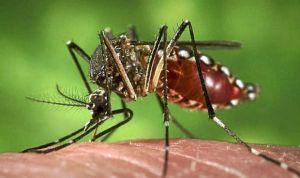 El Gobierno confirma dos nuevas infecciones por dengue en España