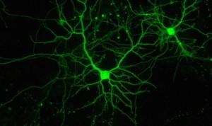 España participa en un proyecto para tratar tumores cerebrales con luz