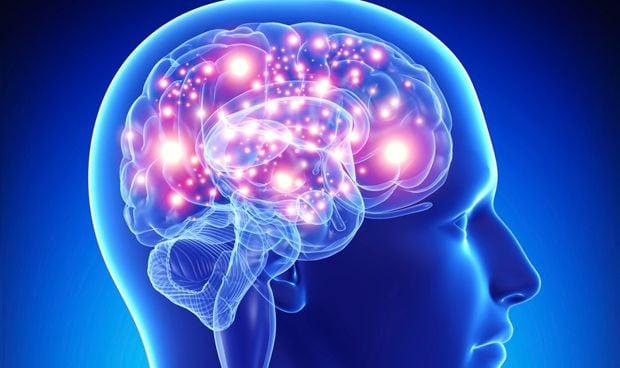Estimular la am�gdala permite 'etiquetar' los recuerdos en el cerebro