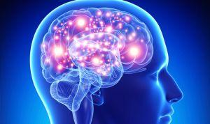Estimular la amígdala permite 'etiquetar' los recuerdos en el cerebro