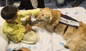 Estudio del 12 de Octubre: la terapia con perros reduce el dolor en menores