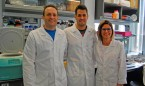 Hallan una conexión entre proteínas que caracteriza el cáncer de mama