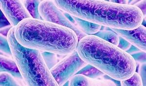 Identifican 8.000 cepas bacterianas en el tracto digestivo humano