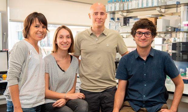 Investigadores españoles crean células hepáticas a partir de células madre