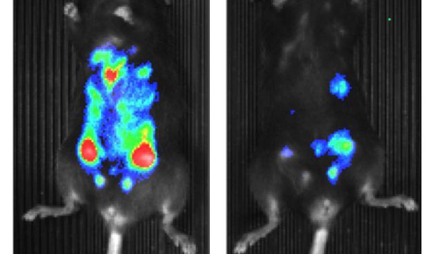 Investigadores espa�oles identifican una prote�na que promueve los tumores
