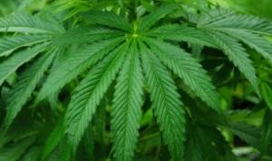 La 'cara amable' del cannabis trata la epilepsia sin efectos negativos