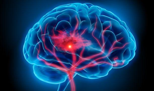 La corteza piriforme está relacionada con el almacenamiento de recuerdos