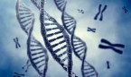 La enfermedad de Gaucher, a la espera de una terapia génica