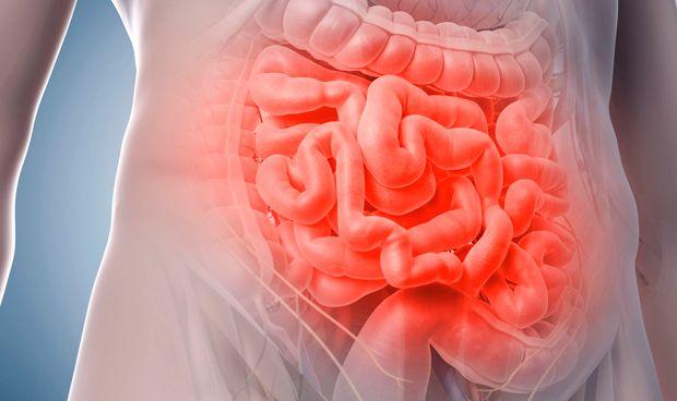 La fructosa se procesa en el intestino delgado, no en el hígado