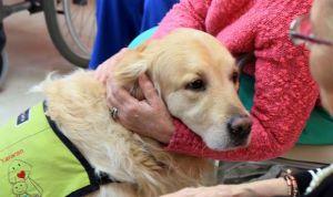 La terapia con animales reduce un 50% el uso de psicofármacos