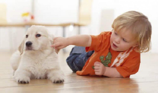 La terapia con perros mejora algunos de los síntomas del TDAH en niños