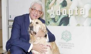 La terapia asistida con mascotas, una realidad en tres hospitales