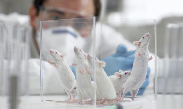 Las 9 razones por las que es necesario investigar con animales en sanidad