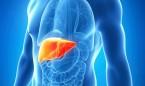 Las bacterias intestinales producen tanto alcohol que generan hígado graso